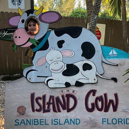 写真The Island Cow枚