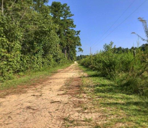 Carvers Creek State Park: trail