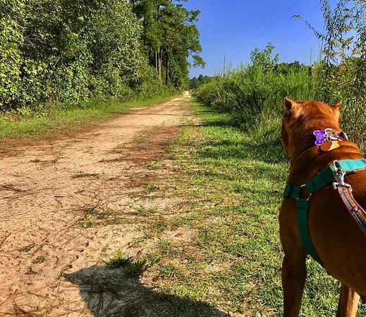 Carvers Creek State Park: trail with doggo