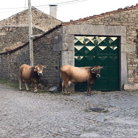 Vimioso, Portekiz: photo4.jpg