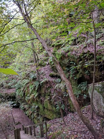 Goreville, IL: Steps on the Round Bluff Trail