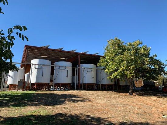 Jeff Runquist Wines: Fermenters