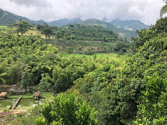 Finca Hotel Los Arrayanes: View from the coffee mountain
