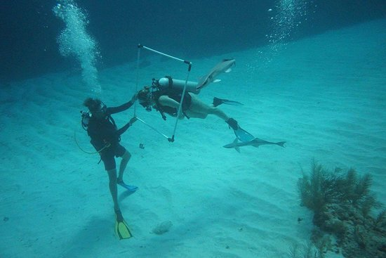Scuba School And Family Dive Center: practicing breathing and swimming at 60ft