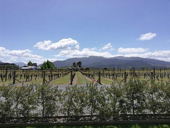 Highlight Wine Tours: IMG-20181015-WA0004_large.jpg