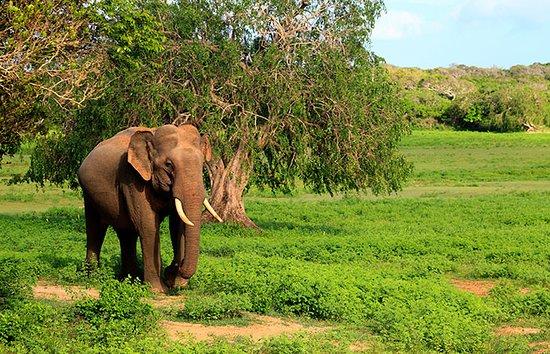 Χαμπαράνα, Σρι Λάνκα: Kaudulla NP