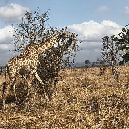 Mikumi National Park, Tanzânia: photo6.jpg