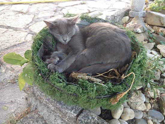 Conques-sur-Orbiel, France: Pour nous les animaux sont très importants, quelques chats déambulent un partout...