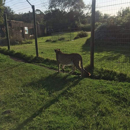 Tenikwa Wildlife Awareness Centre: photo5.jpg