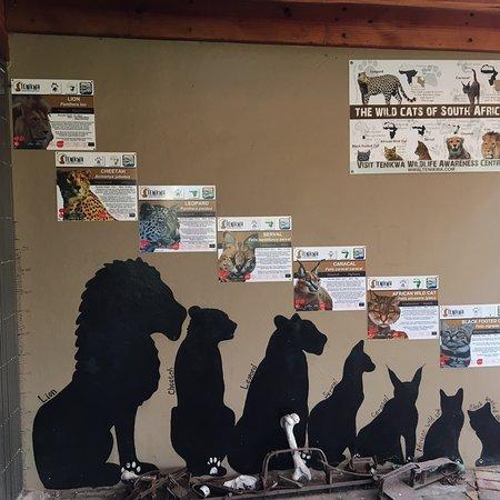 Tenikwa Wildlife Awareness Centre: photo6.jpg
