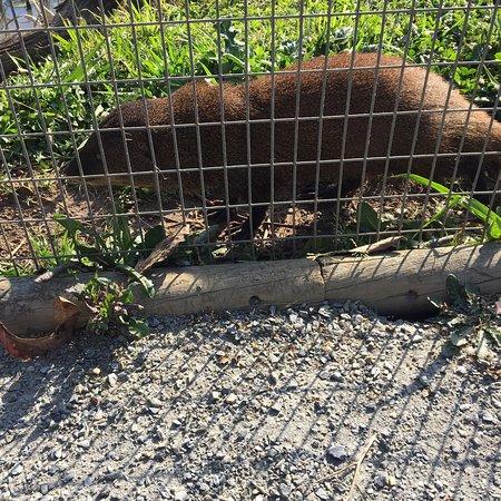 Tenikwa Wildlife Awareness Centre: photo7.jpg