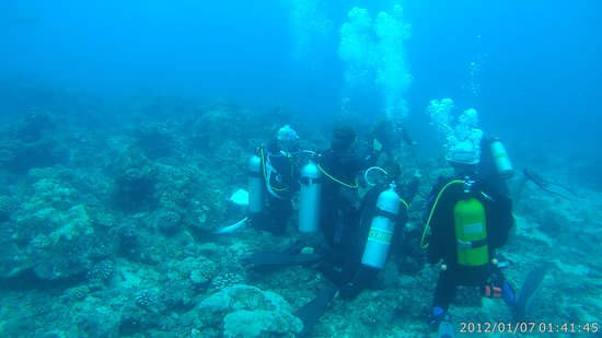 TOPDIVE Tahiti: Divers hiding in the Coral