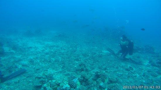 TOPDIVE Tahiti: Jampot time...