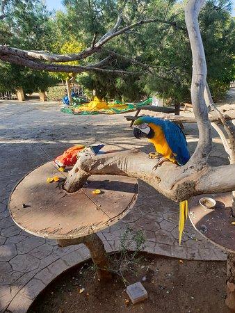 Son Serra de Marina, Spain: les perroquets en liberté