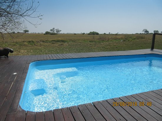Kwando Concession NG14, Botswana: pool area