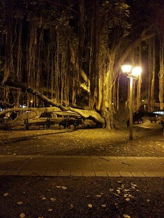 Banyan Tree Park: 20180928_192035_large.jpg