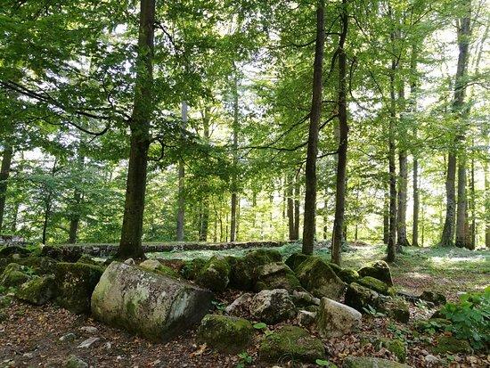 Hunedoara County, โรมาเนีย: IMG_20181006_114027_large.jpg