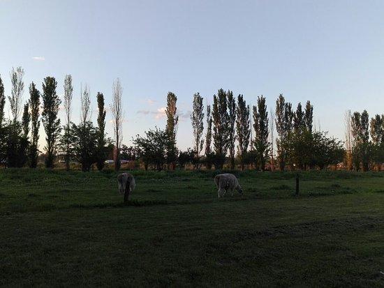 Villa Ruiz, Argentina: IMG_20181013_185223_large.jpg