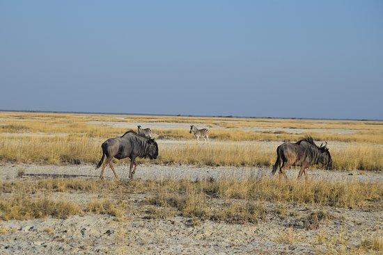 Okavango Delta: Safari en Okavango