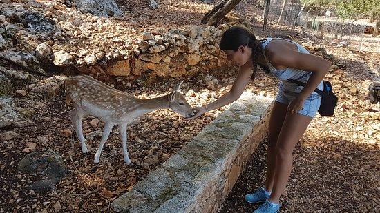 Volimes, Greece: Krmení jelínka