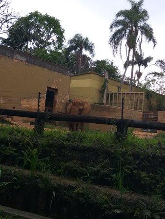 Zoológico de São Paulo: Elefante! A visibilidade dos animais é ótima!
