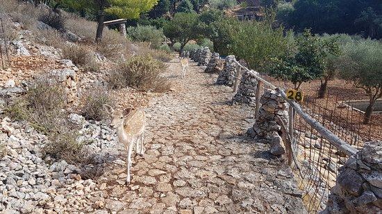 Volimes, Greece: Všudypřítomní jelínci