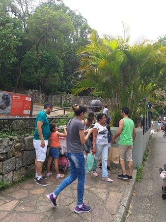 Zoológico de São Paulo: Feriado! Estava lotado!