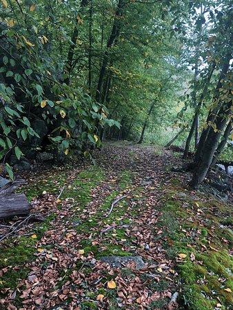 Byram, NJ: Beautiful walking paths at rear of property.