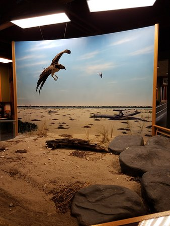 Turners Falls, MA: diorama of wildlife near where the CT river meets the sound