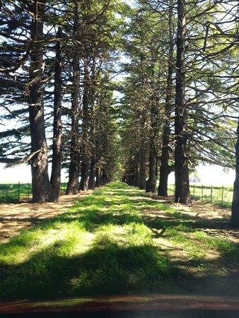 Veinticinco de Mayo, Argentina: Arboleda de ingreso