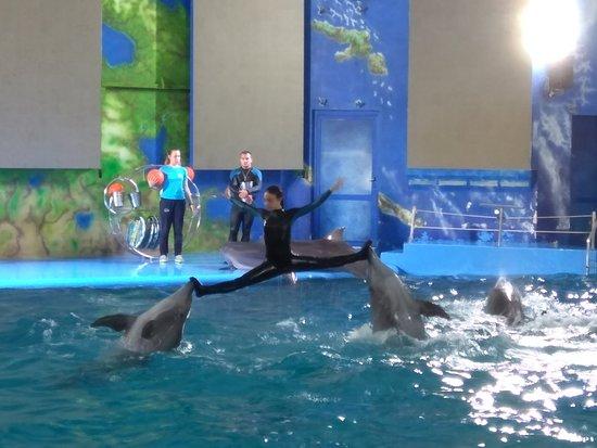 写真Odessa Delphinarium Nemo枚