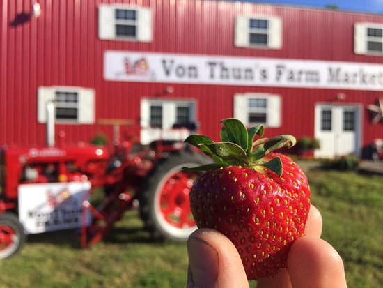 Washington, NJ: Guests love the strawberries on the farm - u-pick or purchase a pint in the market!