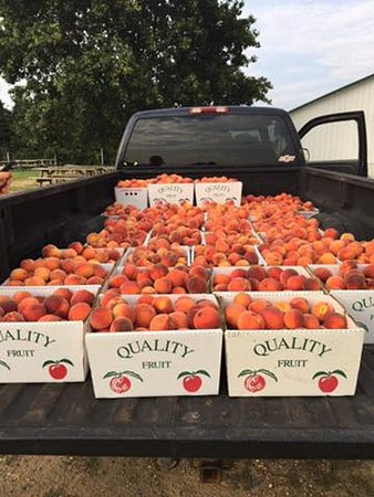 Monmouth Junction, NJ: A large truckful of Von Thun peaches!