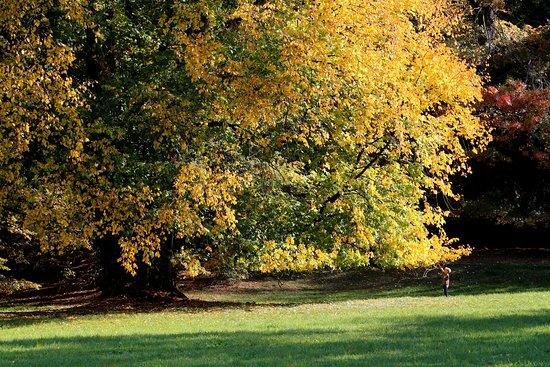 捷克共和国Průhonice: 草地中的大树