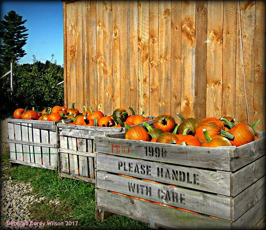 Pick your own or purchase fresh from McKenzie's Farm, Milton NH