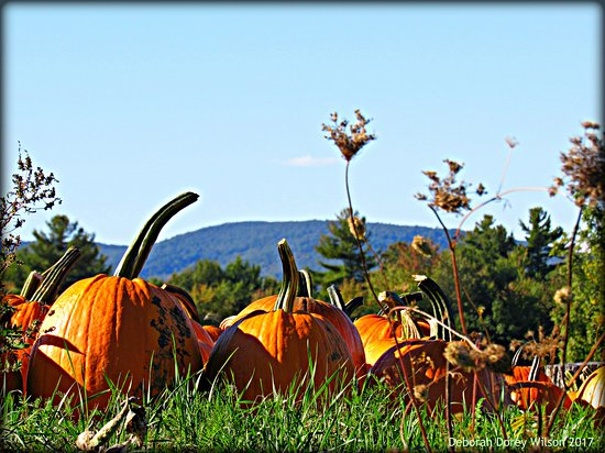 Milton, NH: McKenzie's Farm... beautiful property and awesome mountain views!!