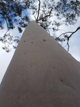 Wirrabara, Australia: Hug a Tree at Wirrabra Forrest.