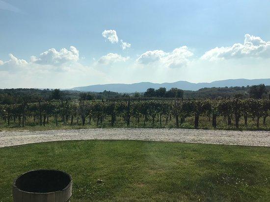 Sempas, Slovenien: Lovely family-owned winery