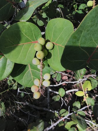 North Miami Beach, FL: plant