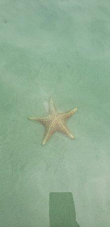 Starfish Beach: 20181013_144407_large.jpg