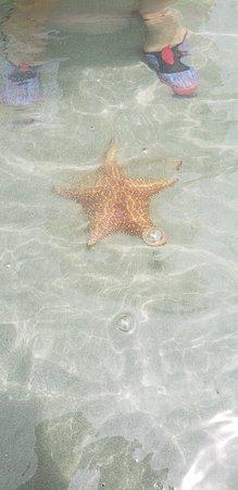 Starfish Beach: 20181013_123413_large.jpg