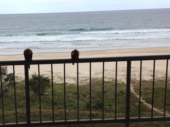 Tugun, Австралия: Tugan Beach view from the San Simeon with friendly birds.