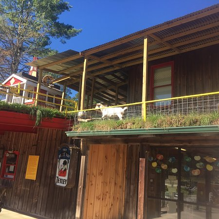 Tiger, GA: Calling All Goat Lovers