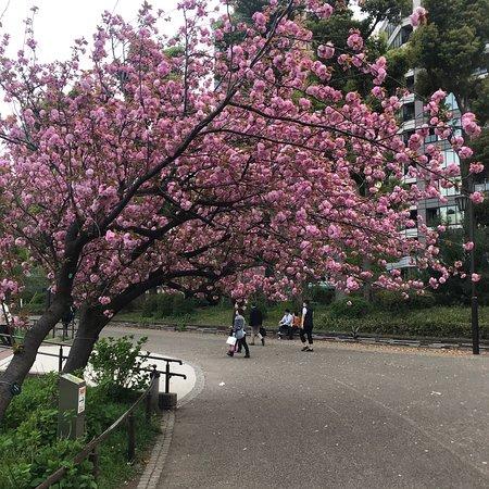 สวนอุเอโนะ: photo0.jpg