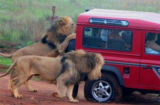 Safari og PheZulu Village Day Tour...