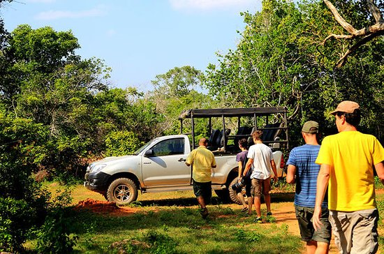 Leopard Safari Tour i Yala National...
