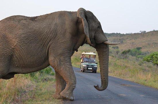 Hluhluwe Imfolozi Safari & St ...
