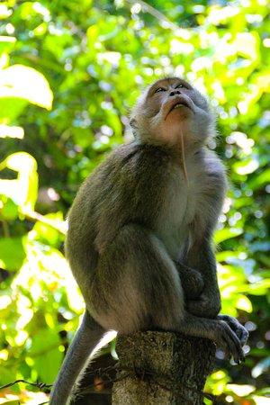 Sangeh, อินโดนีเซีย: Cute Monkey
