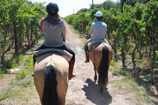 Paseo a caballo por viñedos seguido...