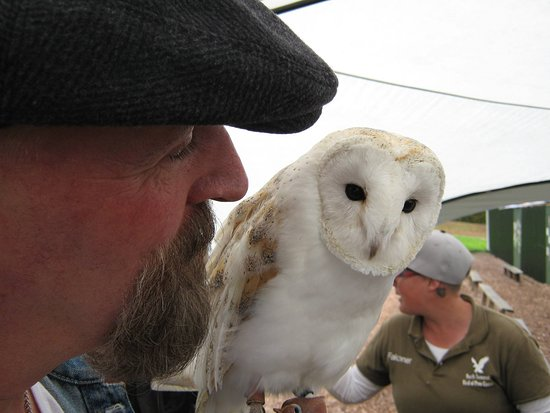 North Somerset Bird of Prey Centre: Me and Inca the Barn Owl